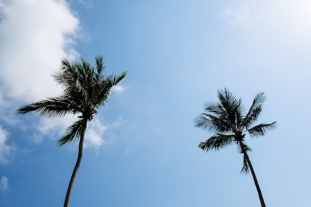 Vista delle belle palme tropicali. concetto di vacanza e vacanza