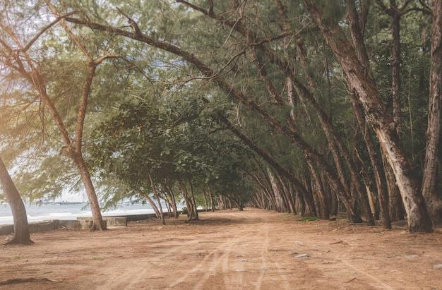 Vista di pini e strada a terra in riva al mare