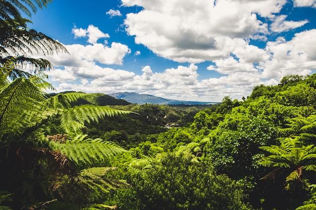 Vista della foresta pluviale a waimangu, rotorua, nuova zelanda