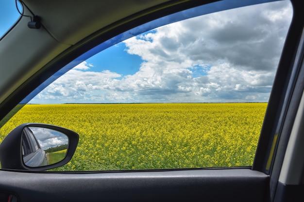 Vista del campo di colza nel finestrino dell'auto