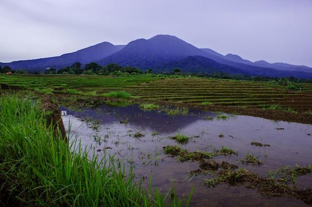 Vista dei campi di riso con montagne blu in una giornata nuvolosa nel nord bengkulu, indonesia