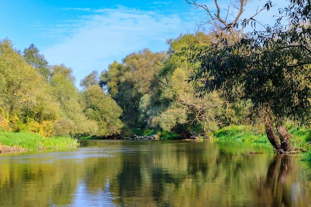 Vista della superficie del fiume con alberi verdi sulle rive su uno sfondo di cielo blu