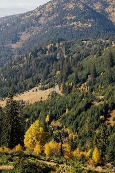 Vista della strada nella bellissima foresta di autunno in montagna.