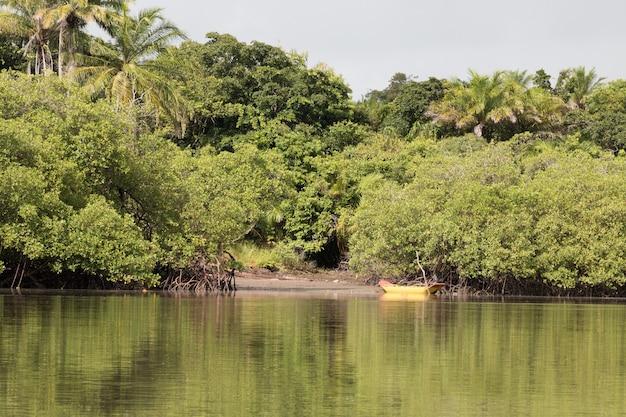 Vista delle radici della vegetazione tropicale di mangrovie.