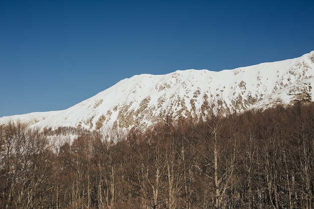 Vista sulle montagne rocciose innevate con alberi nella giornata di sole.
