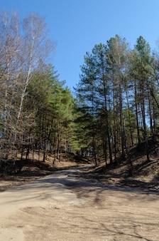 Una vista di una strada sterrata diritta tra due colline con alberi secchi che crescono su entrambi i lati e con colline ricoperte di piante e muschio visto durante una passeggiata nel parco pubblico durante una giornata di primavera