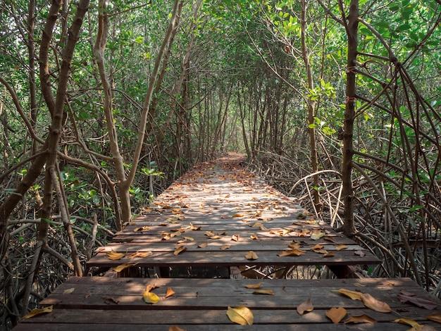 Vista del ponte di legno nella foresta di mangrovie, phetchaburi, thailandia