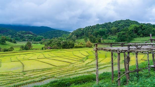 Punto di vista con il campo di riso di montagna