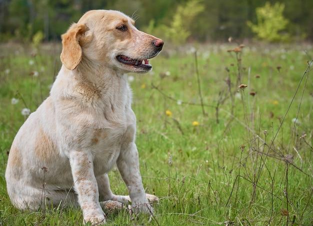 Cane del villaggio sul campo.