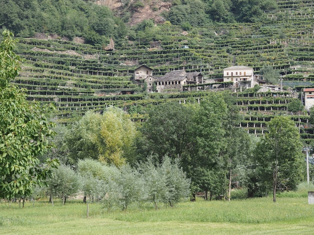 Vigneti in valle d'aosta