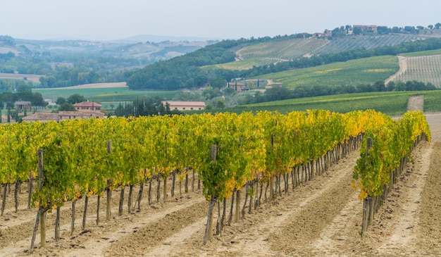 Paesaggio della vigna in toscana, italia.
