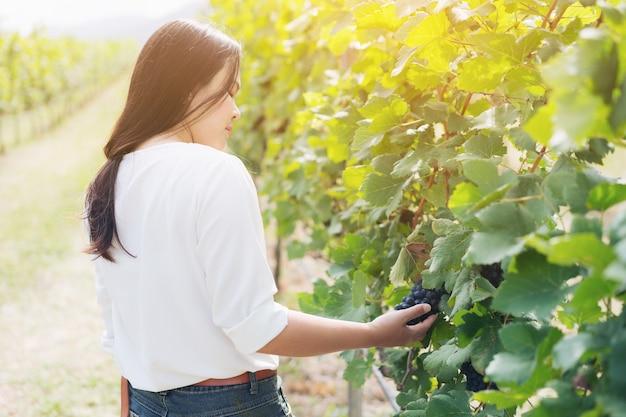 Operaio della vigna che controlla la qualità dell'uva in vigna.