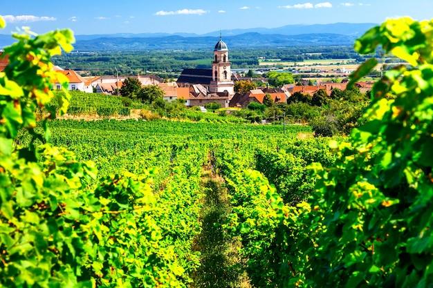 Vigneti della francia. famosa regione dell'alsazia con pittoreschi villaggi tradizionali