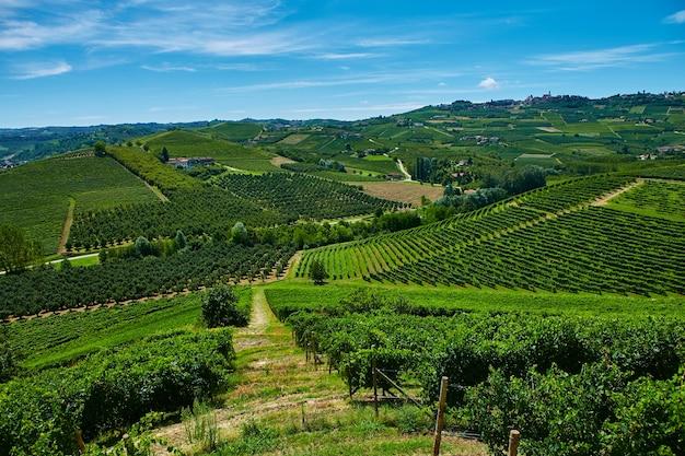 Vigneti sulle colline della provincia del piemonte in italia.