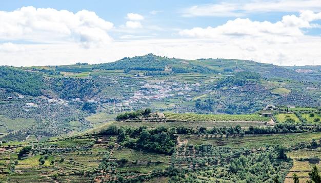 Vigneti e uliveti nelle montagne del portogallo