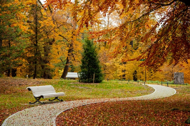 Panchina vintage nel parco stagione autunnale.
