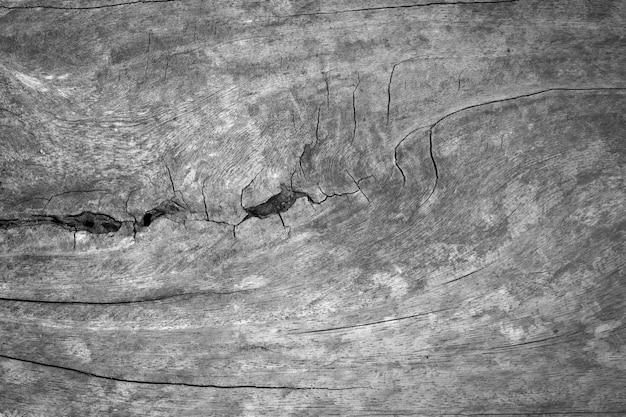 Vecchio fondo di legno in bianco e nero d'annata della natura di struttura