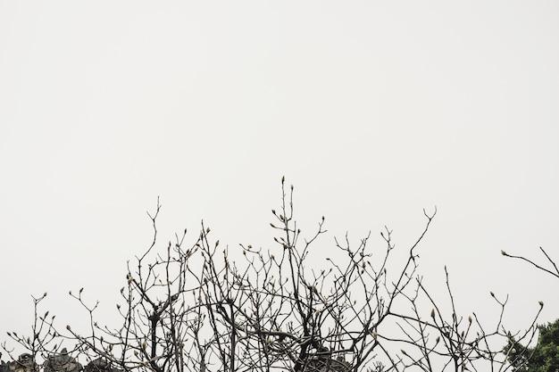 Filtro vintage: albero e rami, lascia spazio per aggiungere il testo