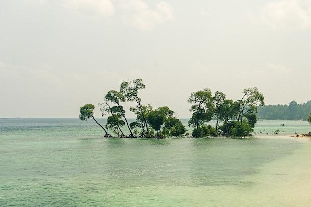 Foto d'epoca di un enorme albero in acqua di mare sulla spiaggia. l'isola havelock delle isole andamane e nicobare. india. bellissimi alberi sulla spiaggia