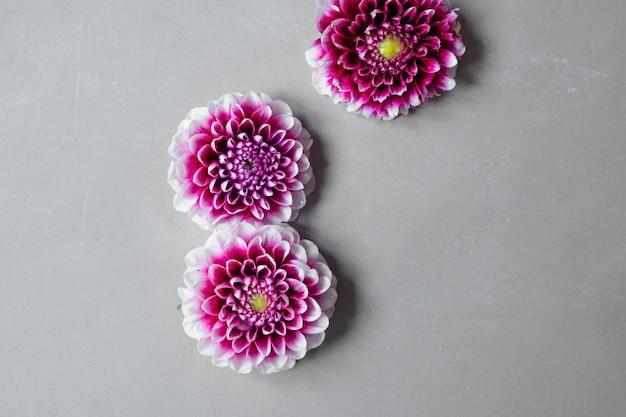 Cartolina vintage con garofani di fiori freschi e posto per il tuo testo