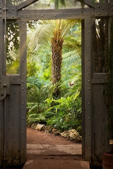Porta in acciaio e vetro vintage in serra con luce solare di piante sempreverdi