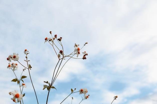 Sfondo di fiori estivi stile vintage