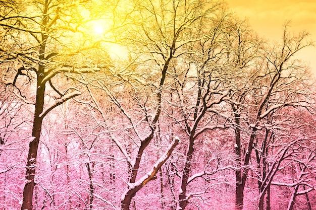 Foresta delle fate innevate d'inverno vintage