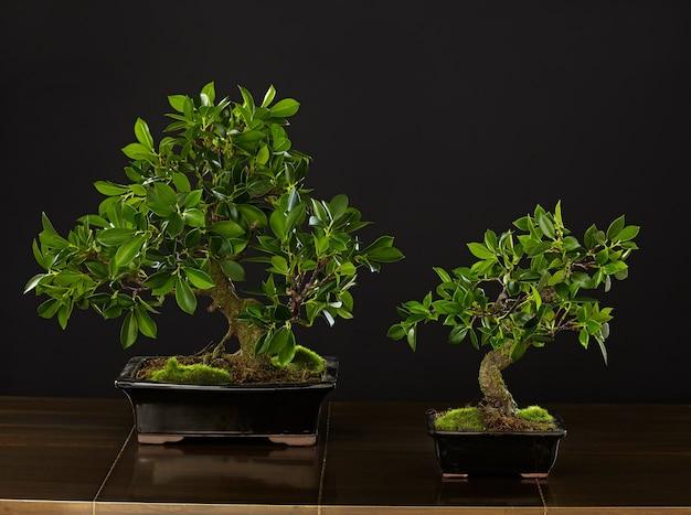 Mensola da tavolo vintage in legno con bonsai verde in vaso