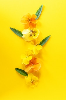Composizione creativa nel fiore viola del pansy. fiori gialli della molla sul fondo di yel ow. composizione floreale, elemento di design. concetto di primavera. vista dall'alto, piatto.