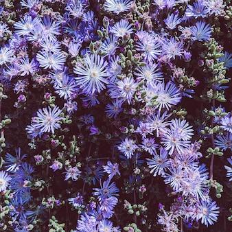 Sfondo di fiori viola. concept art amante delle piante