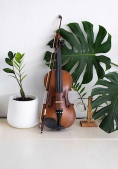 Violino messo accanto a foglia verde e vaso di albero sulla parete bianca