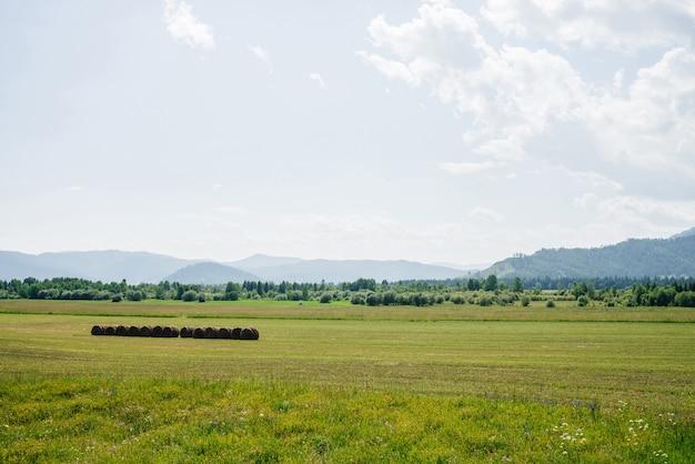 Vivido scenario verde con grande bellissimo campo falciato alla luce del sole meraviglioso paesaggio scenico