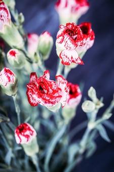 Piccoli garofani bianchi rossi vividi fiori su uno sfondo scuro
