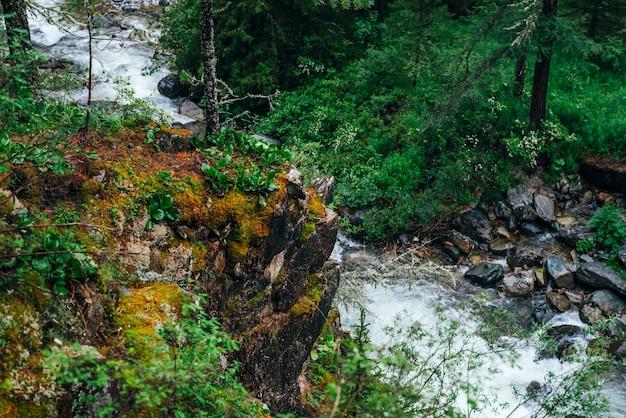 Vivido scenario della freschezza della foresta. ricca vegetazione sulla scogliera ricoperta di muschio sopra il fiume di montagna