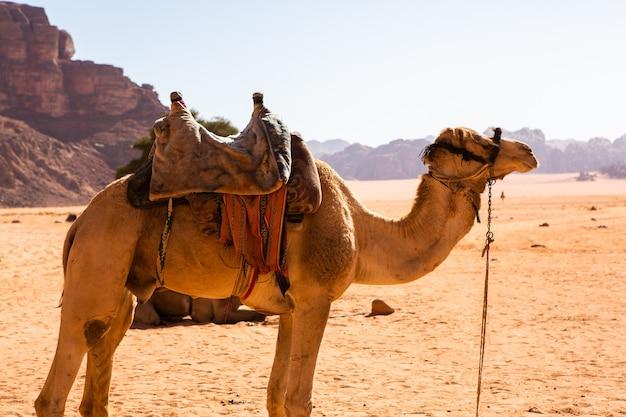 Deserto del wadi rum in giordania