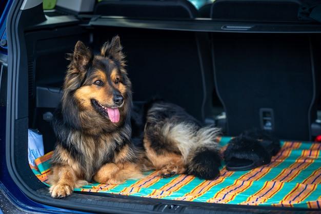Cane in attesa nel bagagliaio di un'auto
