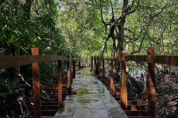 Cammina attraverso la foresta di mangrovie in asia.
