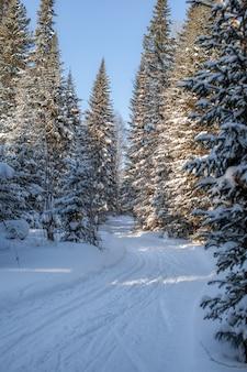 Una passeggiata nella foresta invernale. bellissimo paesaggio invernale.