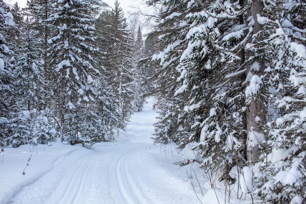 Una passeggiata attraverso la foresta invernale. alberi di neve e una pista per lo sci di fondo. strade e sentieri forestali belli e insoliti. bellissimo paesaggio invernale.