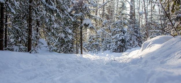 Una passeggiata nella foresta invernale. alberi di neve e una pista da sci di fondo. strade e sentieri forestali belli e insoliti. bellissimo paesaggio invernale.