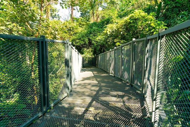Modo a piedi nella foresta a canopy passeggiate al giardino botanico queen sirikit chiang mai, thailandia
