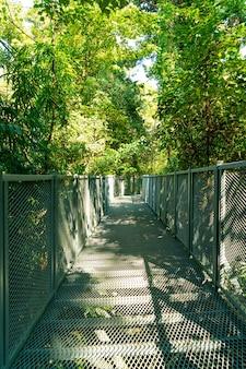 A piedi nella foresta a canopy passeggiate al giardino botanico queen sirikit chiang mai, thailandia