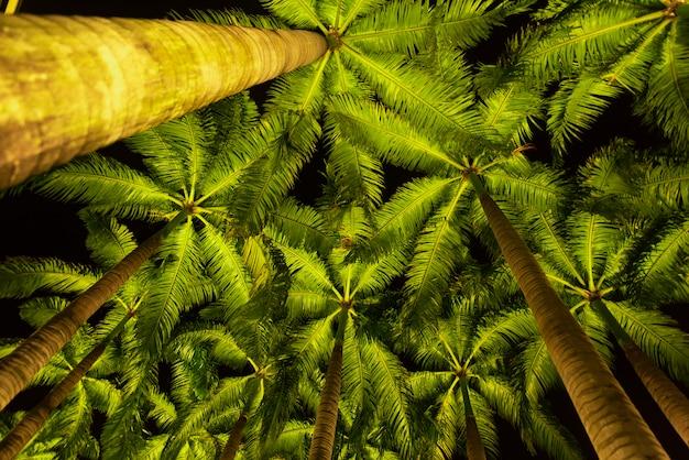Cammini il modo con gli alberi di noce di cocco accanto ai parchi e all'aperto della baia singapore del porticciolo