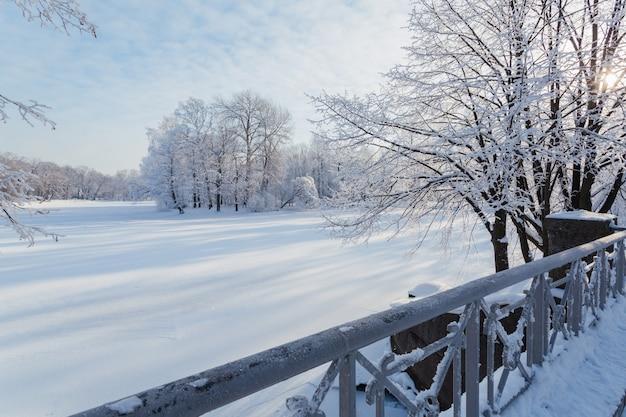 Camminando nel parco invernale sull'isola di yelagin a san pietroburgo, russia.
