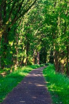 Percorso di corsia pedonale con alberi verdi nella foresta. bellissimo vicolo, strada nel parco. strada attraverso la foresta estiva.