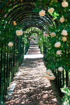 Una passerella tra le rose