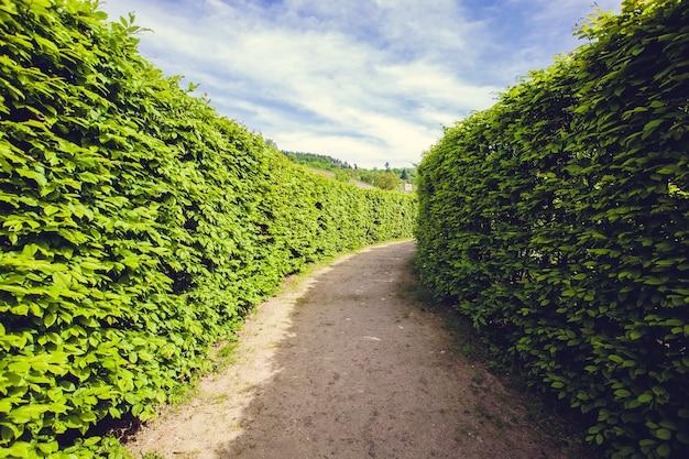 Passerella nel giardino wallenstein a praga