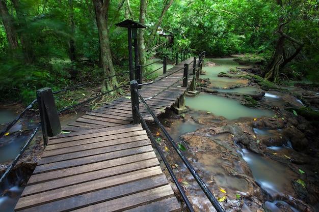 Passerella in legno per lo studio in natura foresta pluviale sul parco nazionale in thailandia.