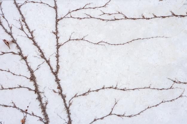 Il muro è fatto di mattoni e poi dipinto di bianco. ci sono piante rampicanti sulla parete sinistra. questo muro è popolare