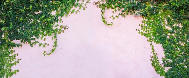 Muro di edera
